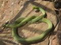 140.jpg snake 3